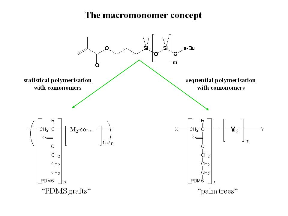 Scheme 6.1: Preparation of Graft-Copolymers by copolymerization of macromonomers